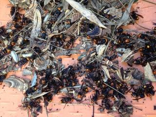 大野城 蜂の巣駆除