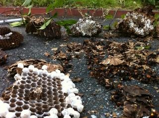 蜂の巣駆除 福岡市