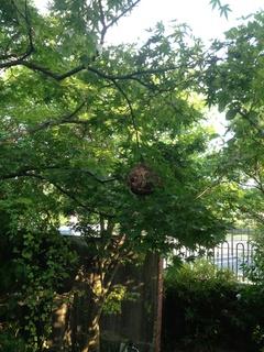 太宰府市 蜂の巣駆除