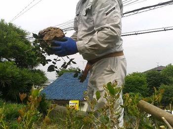 おおきなスズメバチの巣の駆除.jpg