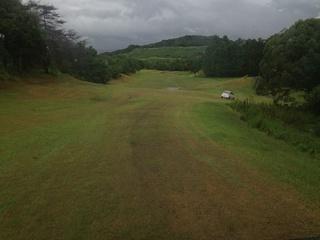 golfbee1-4.jpg