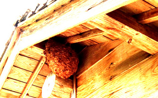宮崎 蜂の巣駆除